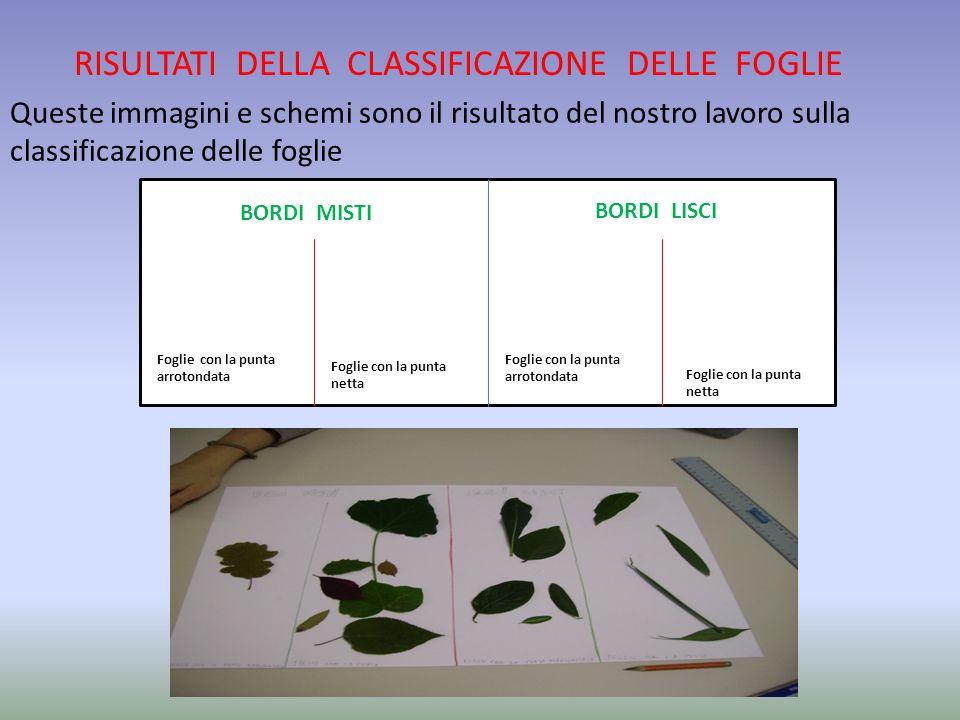RISULTATI DELLA CLASSIFICAZIONE DELLE FOGLIE Queste immagini e schemi sono il risultato del nostro lavoro sulla classificazione delle foglie BORDI MIS
