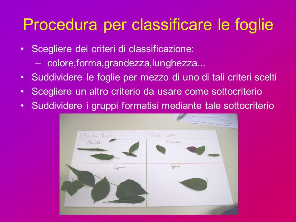Procedura per classificare le foglie Scegliere dei criteri di classificazione: – colore,forma,grandezza,lunghezza... Suddividere le foglie per mezzo d