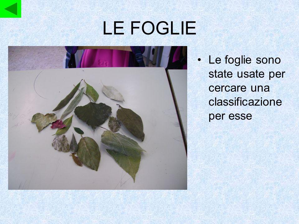 IL FOGLIO Il foglio è stato usato per disporre le foglie in modo da essere divise in base alle loro caratteristiche