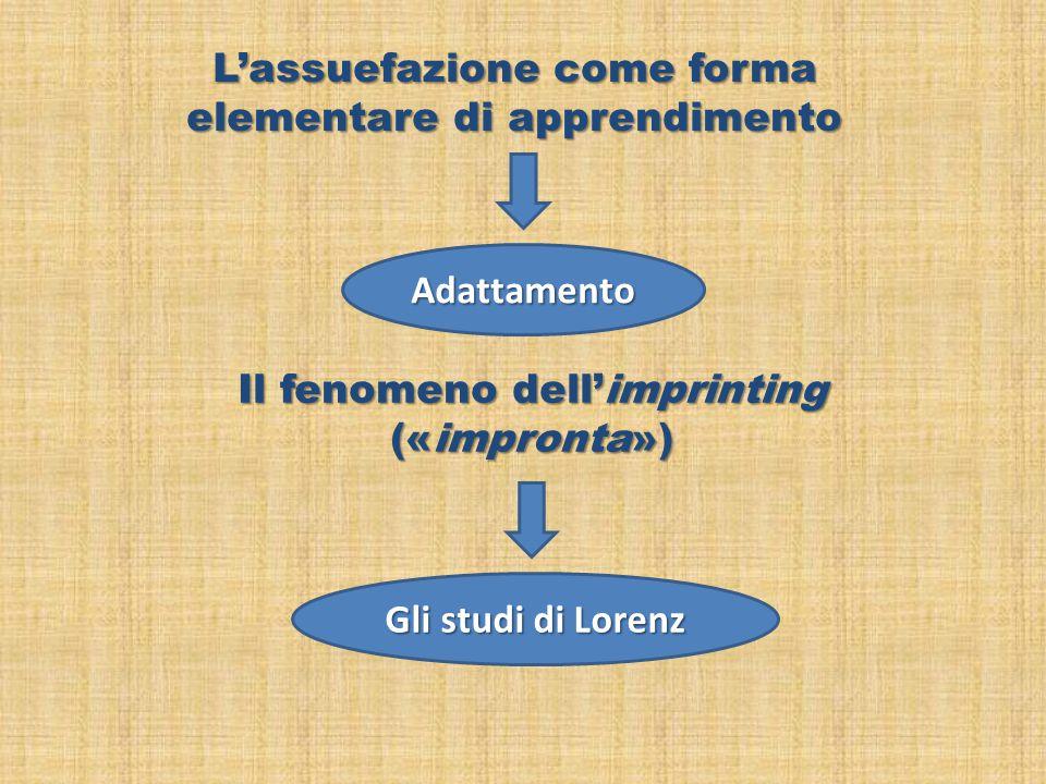 L'assuefazione come forma elementare di apprendimento Adattamento Il fenomeno dell'imprinting («impronta») Gli studi di Lorenz