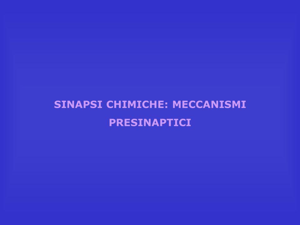 SINAPSI CHIMICHE: MECCANISMI PRESINAPTICI