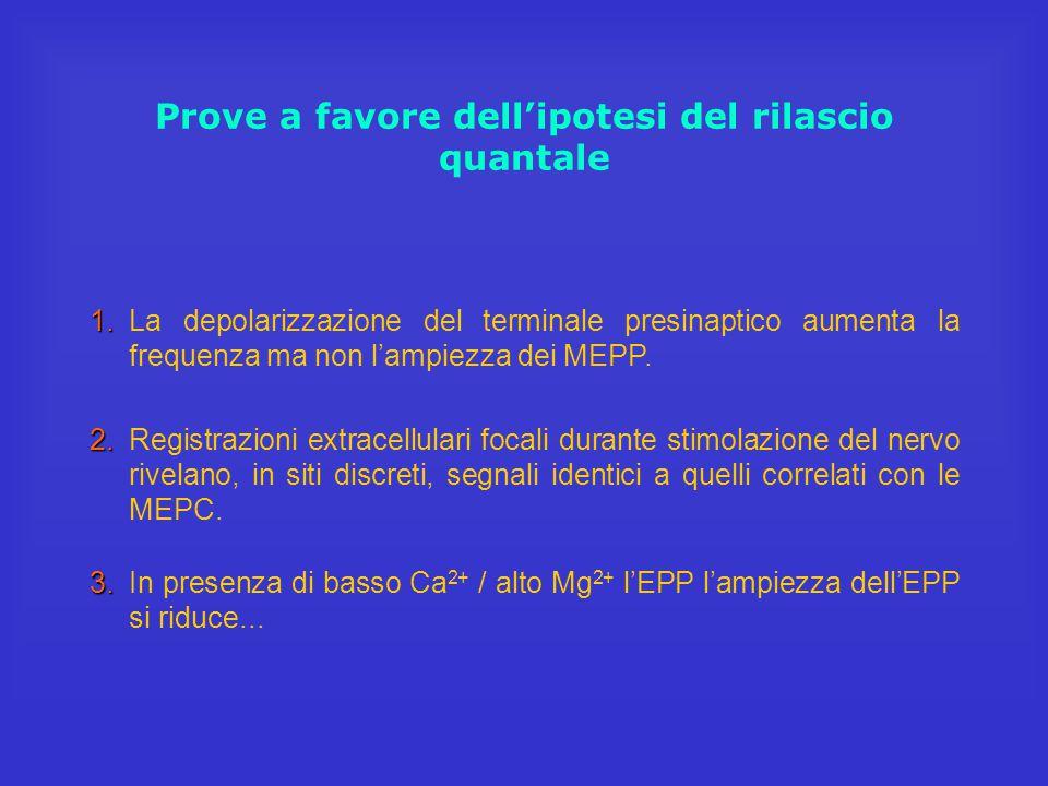 Prove a favore dell'ipotesi del rilascio quantale 1. 1.La depolarizzazione del terminale presinaptico aumenta la frequenza ma non l'ampiezza dei MEPP.