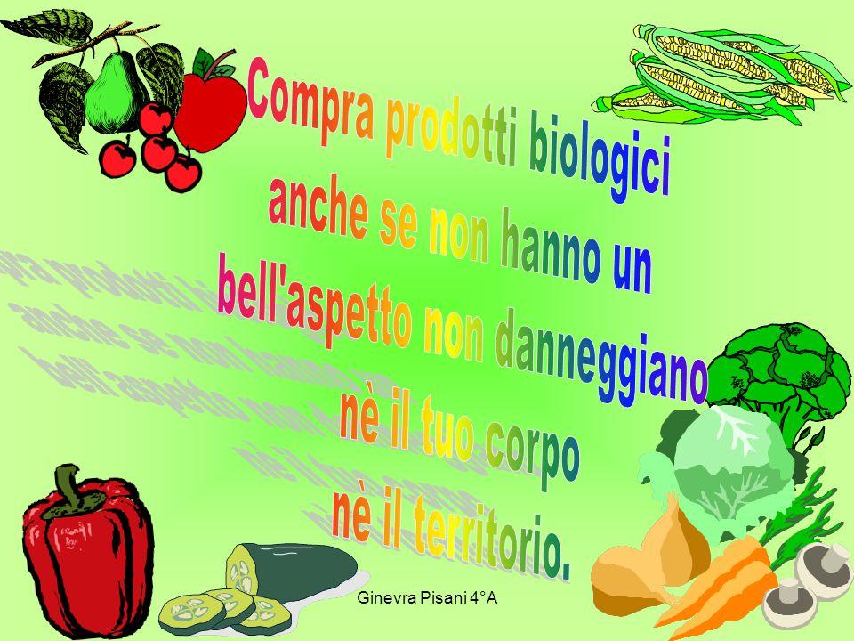 Dario Lazzari 4° A
