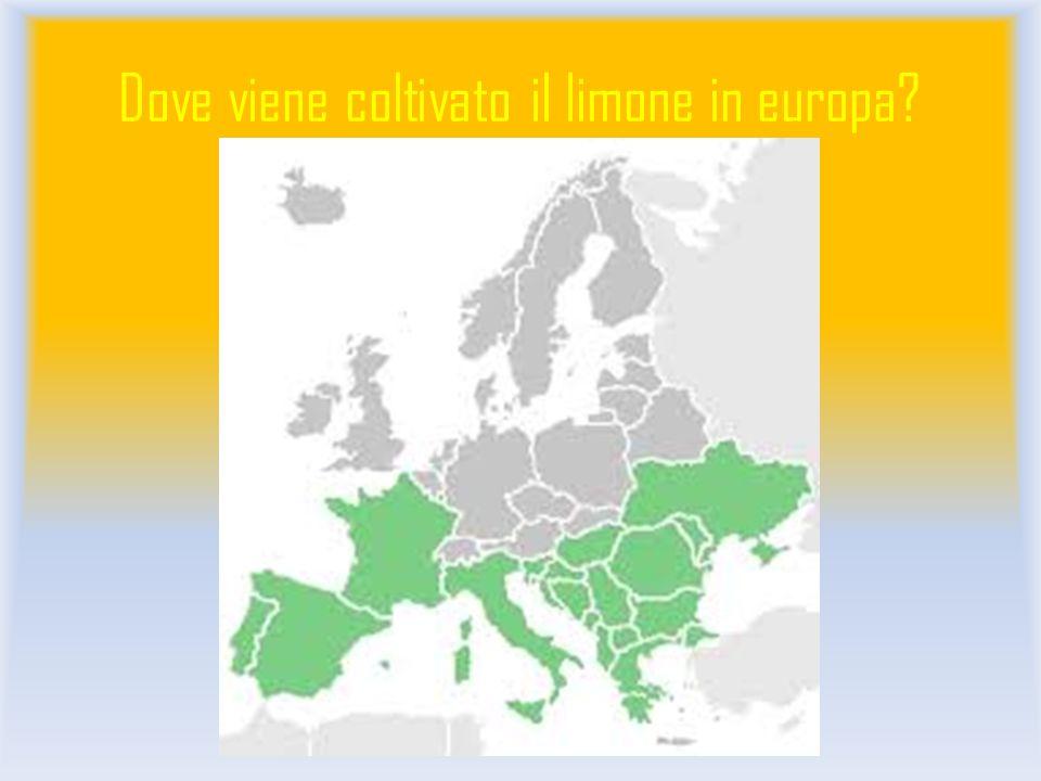 Dove viene coltivato il limone in europa?