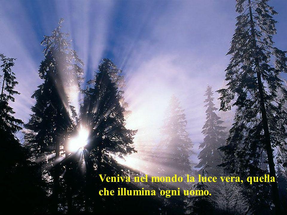 La luce splende nelle tenebre, ma le tenebre non l'hanno accolta.