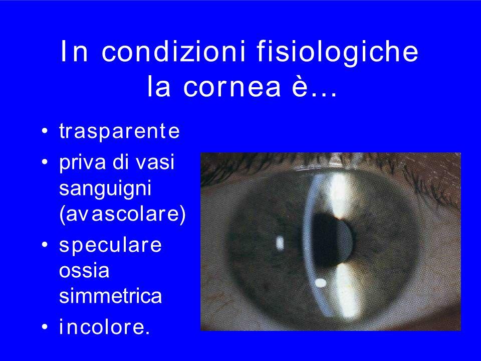 I ncondizioni fisiologichela cornea è…I ncondizioni fisiologichela cornea è… trasparente priva di vasi sanguigni (avascolare) speculare ossia simmetri