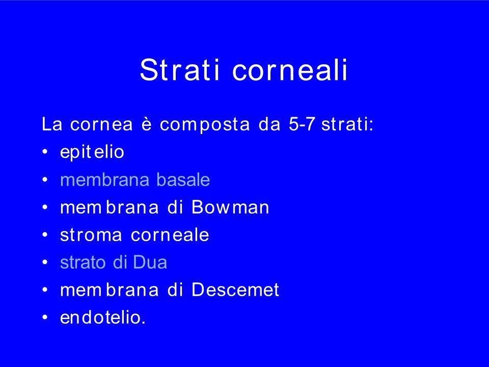 Strati cornealiStrati corneali La cornea è com posta da 5-7 strati: epit elio membrana basale mem brana di Bowman stroma corneale strato di Dua mem br
