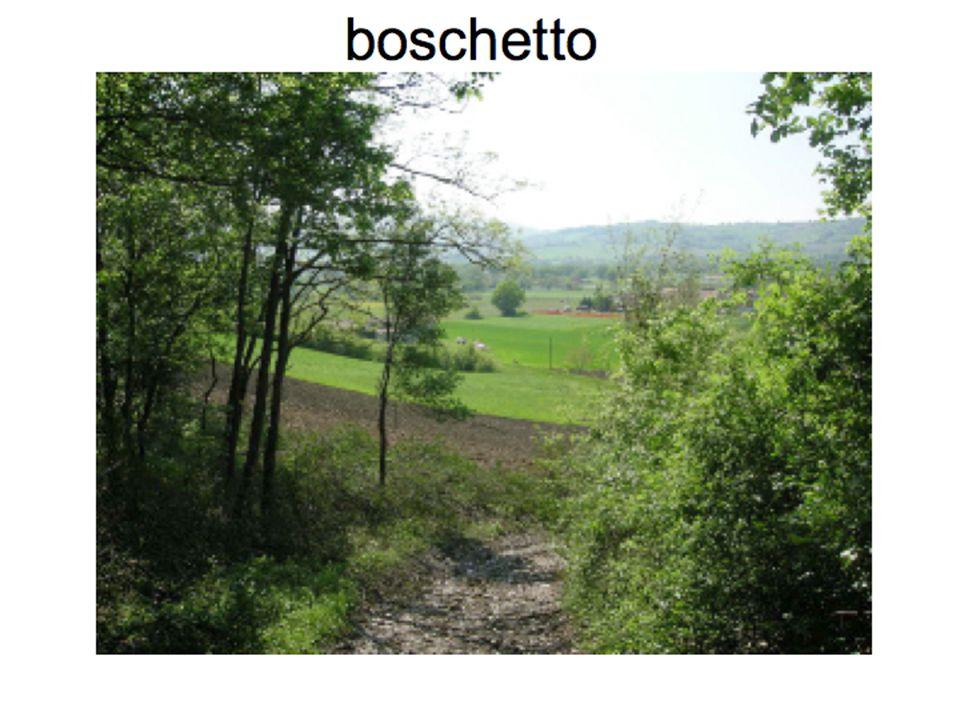 boschetto