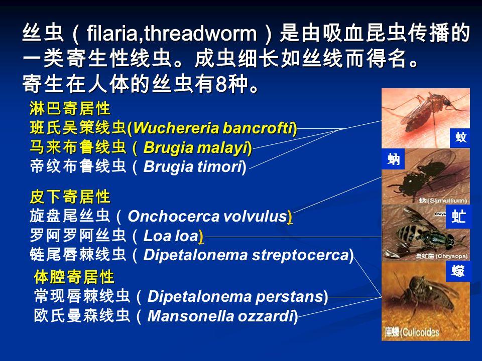 丝虫( filaria,threadworm )是由吸血昆虫传播的 一类寄生性线虫。成虫细长如丝线而得名。 寄生在人体的丝虫有 8 种。 淋巴寄居性 班氏吴策线虫 (Wuchereria bancrofti) 马来布鲁线虫( Brugia malayi) 淋巴寄居性 班氏吴策线虫 (Wucherer