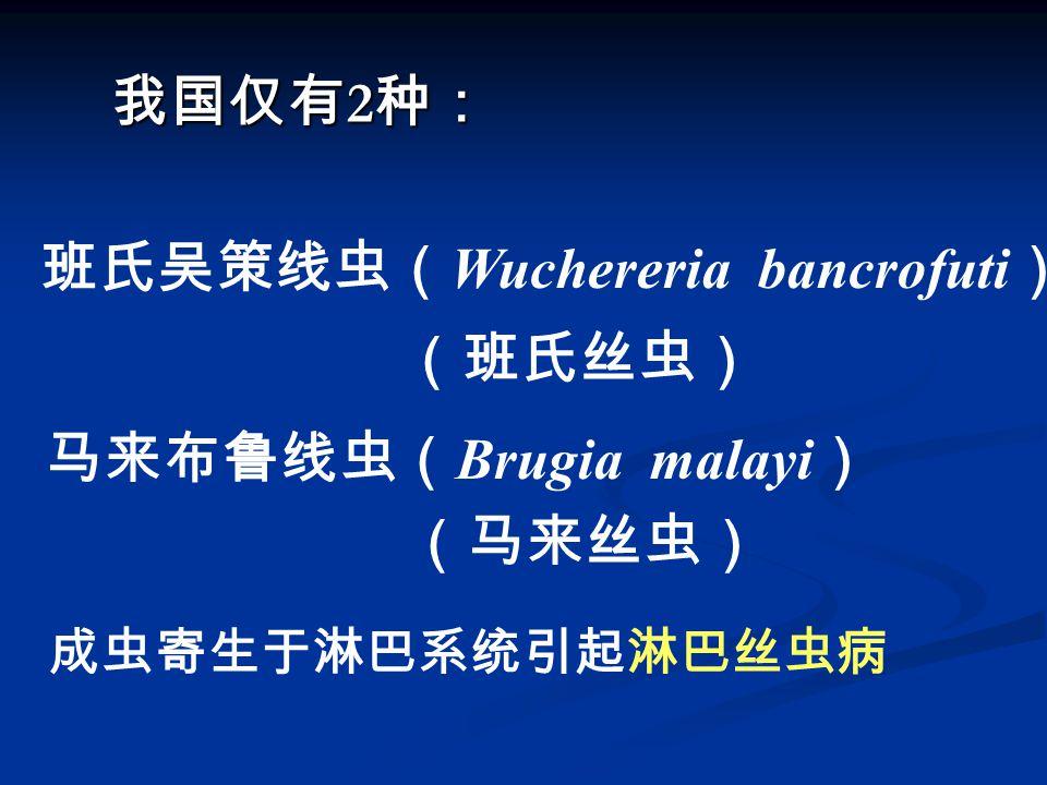 我国仅有 2 种: 班氏吴策线虫( Wuchereria bancrofuti ) (班氏丝虫) 马来布鲁线虫( Brugia malayi ) (马来丝虫) 成虫寄生于淋巴系统引起淋巴丝虫病