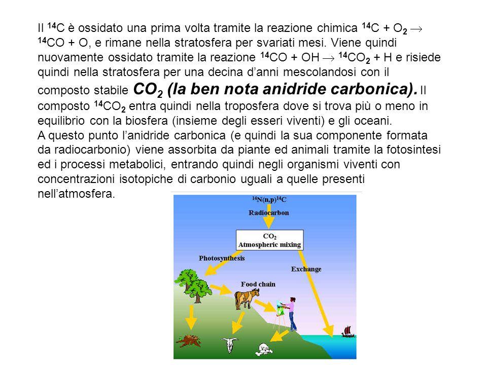 Il 14 C è ossidato una prima volta tramite la reazione chimica 14 C + O 2  14 CO + O, e rimane nella stratosfera per svariati mesi.