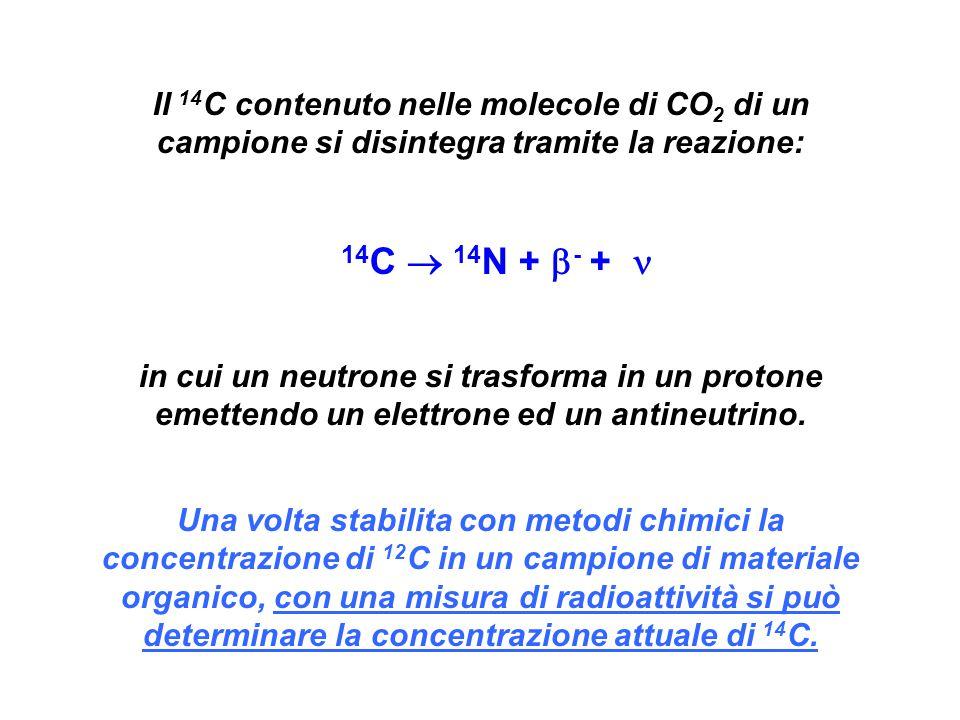 Il 14 C contenuto nelle molecole di CO 2 di un campione si disintegra tramite la reazione: 14 C  14 N +  - + in cui un neutrone si trasforma in un protone emettendo un elettrone ed un antineutrino.