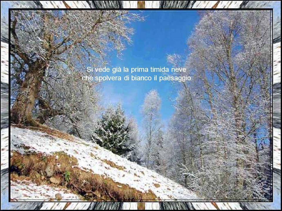 La natura si spoglia lentamente e affronta i primi freddi