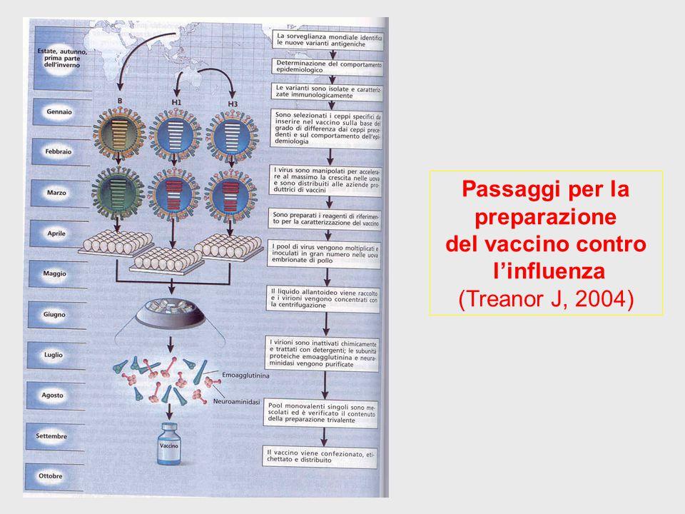 Passaggi per la preparazione del vaccino contro l'influenza (Treanor J, 2004)