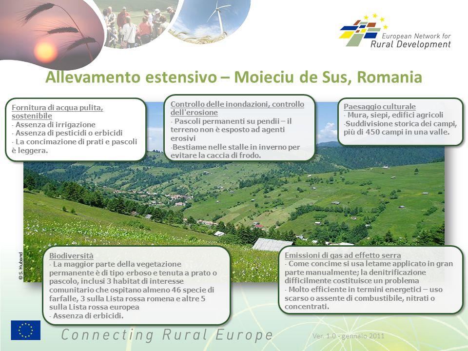 Allevamento estensivo – Moieciu de Sus, Romania Biodiversità - La maggior parte della vegetazione permanente è di tipo erboso e tenuta a prato o pasco