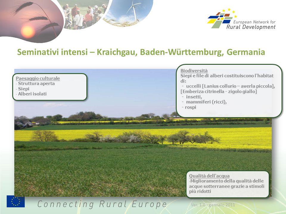 Seminativi intensi – Kraichgau, Baden-Württemburg, Germania Biodiversità Siepi e file di alberi costituiscono l'habitat di: - uccelli [Lanius collurio