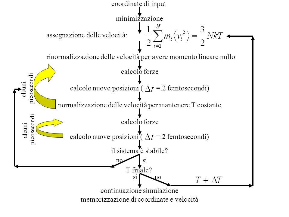 coordinate di input minimizzazione assegnazione delle velocità: rinormalizzazione delle velocità per avere momento lineare nullo calcolo forze calcolo nuove posizioni (=.2 femtosecondi) normalizzazione delle velocità per mantenere T costante alcuni picosecondi calcolo nuove posizioni (=.2 femtosecondi) alcuni picosecondi calcolo forze il sistema è stabile.