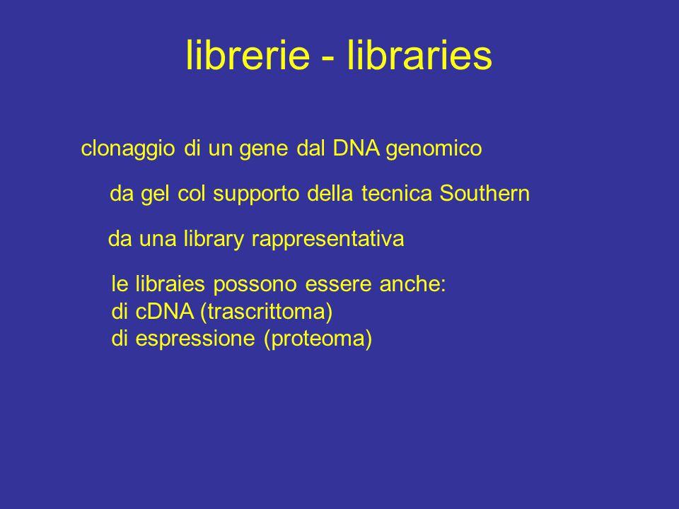 librerie - libraries clonaggio di un gene dal DNA genomico da gel col supporto della tecnica Southern da una library rappresentativa le libraies possono essere anche: di cDNA (trascrittoma) di espressione (proteoma)