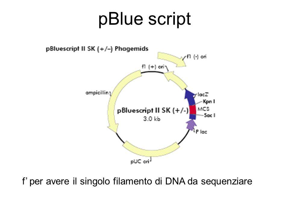 pBlue script f' per avere il singolo filamento di DNA da sequenziare