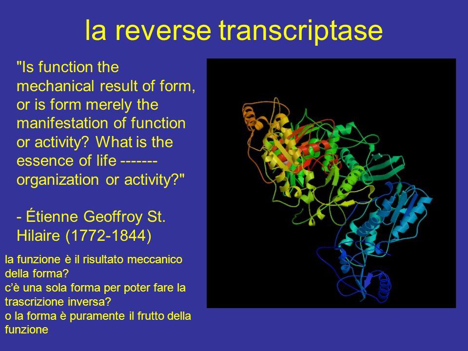 integrazione nel genoma i plasmidi si possono integrare in maniera random nei microorganismi sono stati individuati enzimi che fanno avvenire ricombinazione sito specifica riconoscendo delle sequenze consensus il sistema Cre-Lox del fago P1 il sistema FLP detto flip di lievito Saccharomyces cerevisiae questi sistemi derivano dalla applicazione di un processo naturale di ricombinazione utilizzabile anche in altri organismi il principio è applicabile perchè il DNA è universale