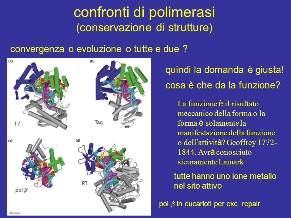 confronti intelligenti Doublie, Sawaya, & Ellenberger (1999) compared the structures of four different polymerases from three different families and found that although the amino acid sequences of these enzymes were very dissimilar, they all had metal ions (usually magnesium) in their active site.