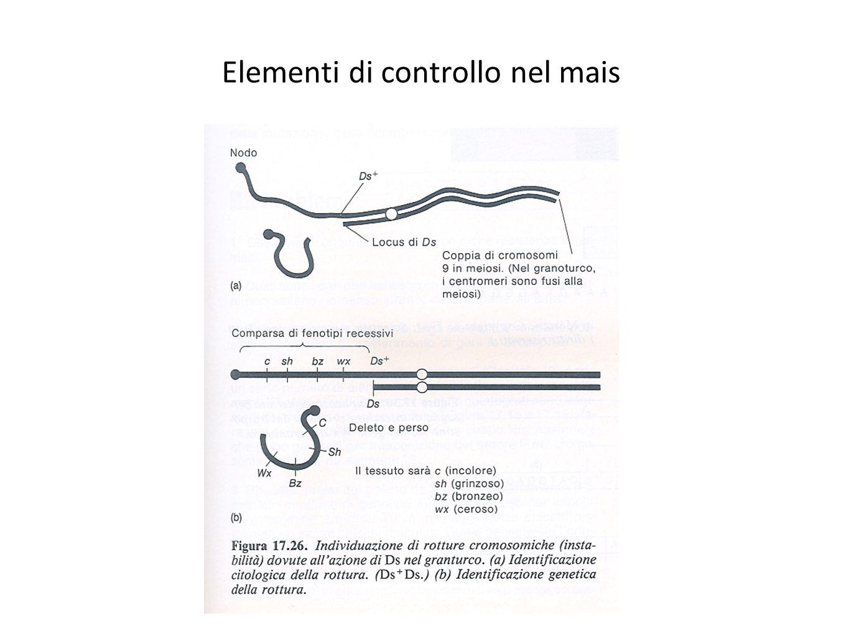 Elementi di controllo nel mais