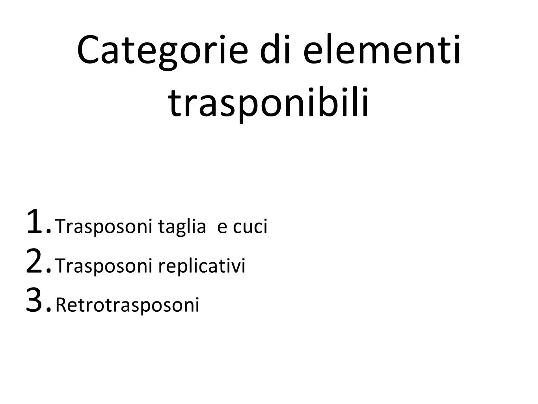 Categorie di elementi trasponibili 1. Trasposoni taglia e cuci 2. Trasposoni replicativi 3. Retrotrasposoni