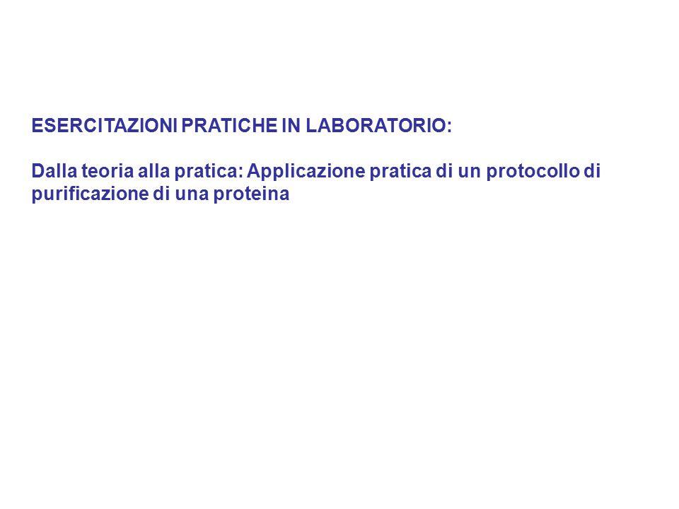 ESERCITAZIONI PRATICHE IN LABORATORIO: Dalla teoria alla pratica: Applicazione pratica di un protocollo di purificazione di una proteina