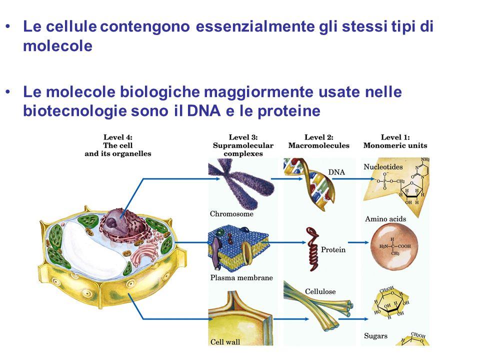 Le cellule contengono essenzialmente gli stessi tipi di molecole Le molecole biologiche maggiormente usate nelle biotecnologie sono il DNA e le protei