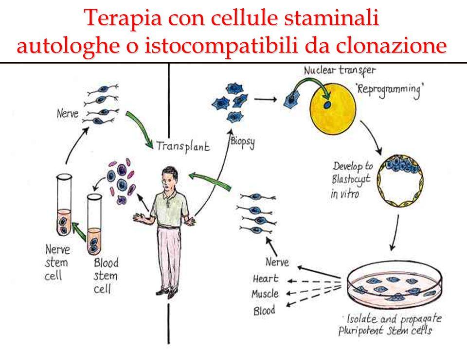Terapia con cellule staminali autologhe o istocompatibili da clonazione