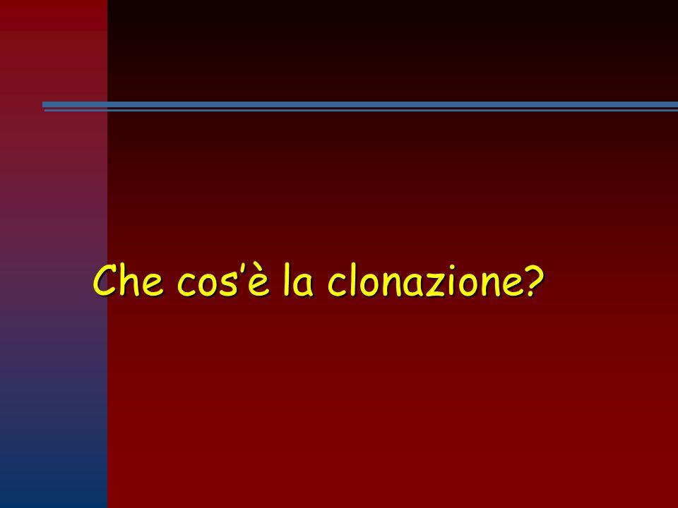 Che cos'è la clonazione?