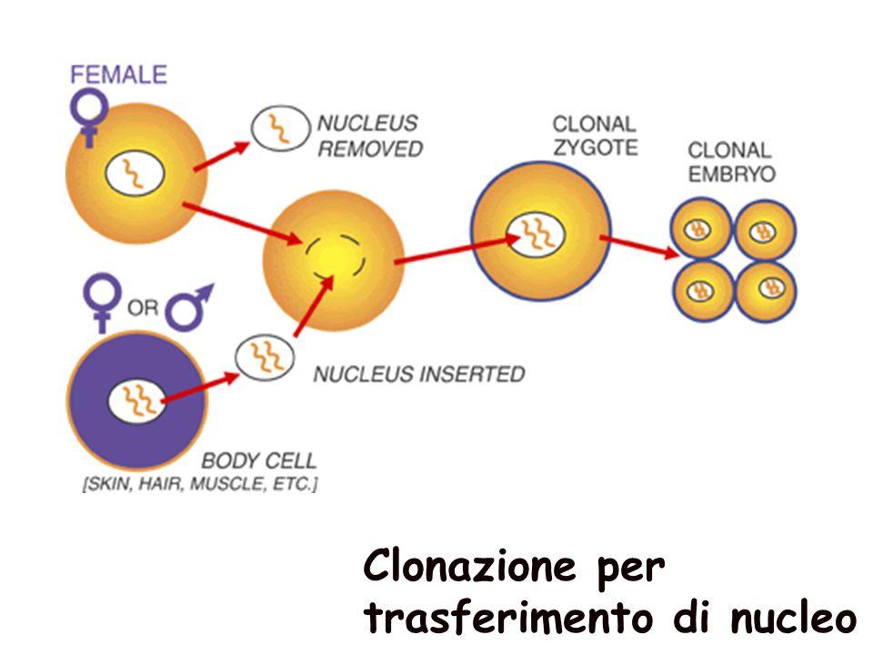 Clonazione per trasferimento di nucleo