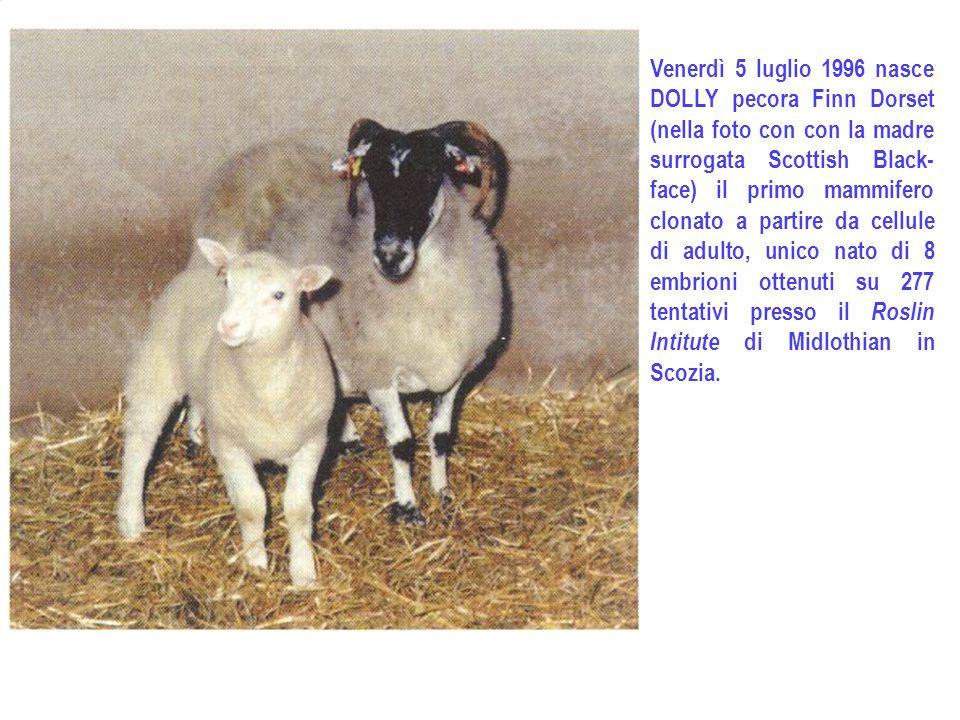Venerdì 5 luglio 1996 nasce DOLLY pecora Finn Dorset (nella foto con con la madre surrogata Scottish Black- face) il primo mammifero clonato a partire da cellule di adulto, unico nato di 8 embrioni ottenuti su 277 tentativi presso il Roslin Intitute di Midlothian in Scozia.