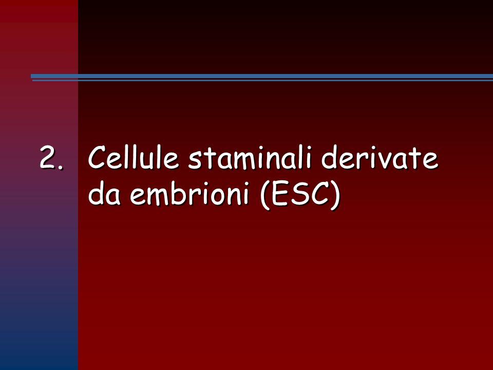 2. Cellule staminali derivate da embrioni (ESC)