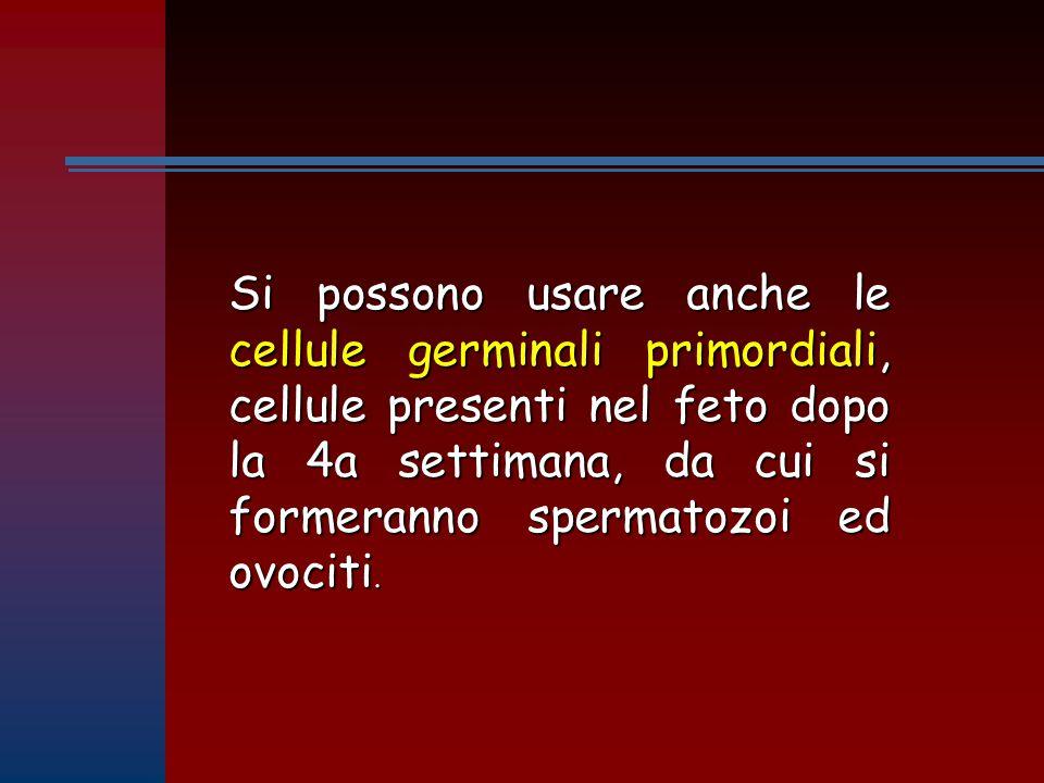 Si possono usare anche le cellule germinali primordiali, cellule presenti nel feto dopo la 4a settimana, da cui si formeranno spermatozoi ed ovociti.
