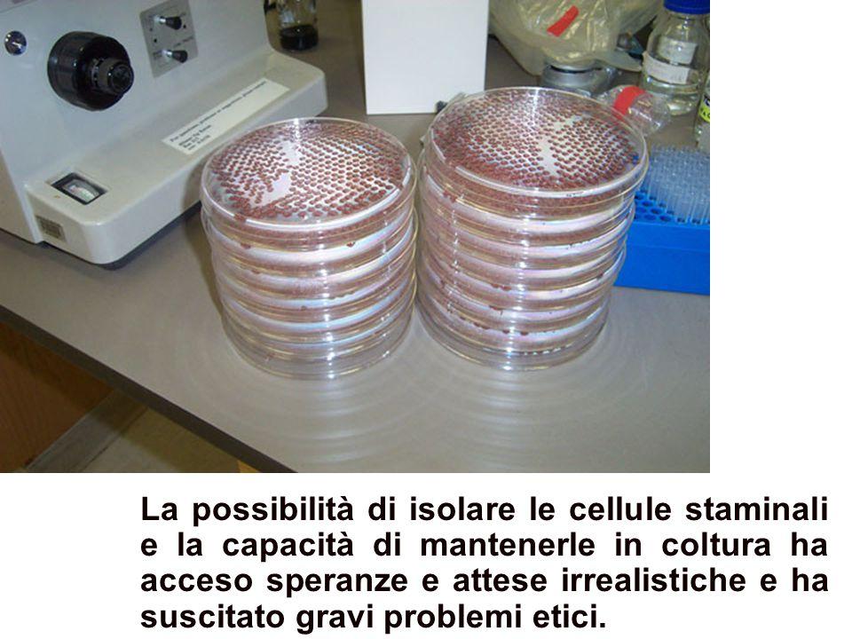 Colture di cellule staminali La possibilità di isolare le cellule staminali e la capacità di mantenerle in coltura ha acceso speranze e attese irrealistiche e ha suscitato gravi problemi etici.