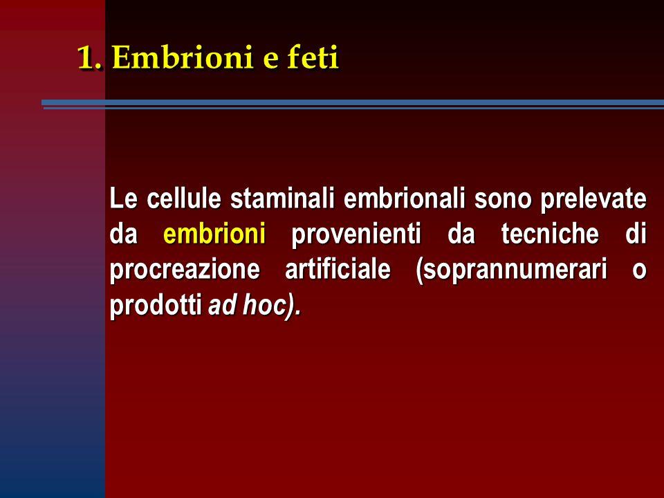 1. Embrioni e feti Le cellule staminali embrionali sono prelevate da embrioni provenienti da tecniche di procreazione artificiale (soprannumerari o pr