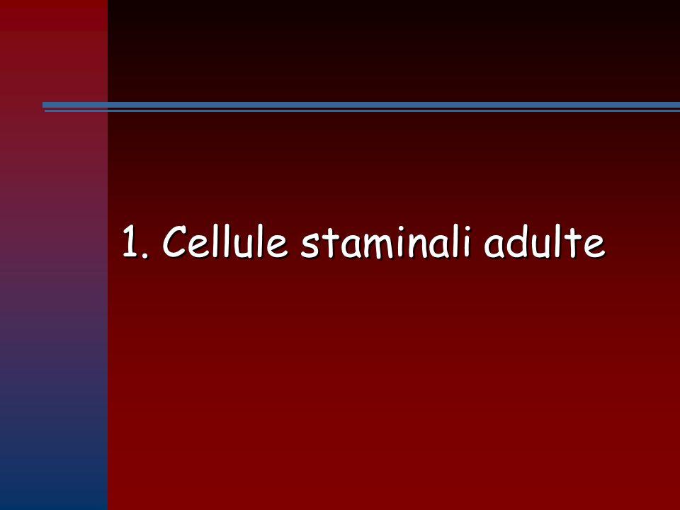 1. Cellule staminali adulte