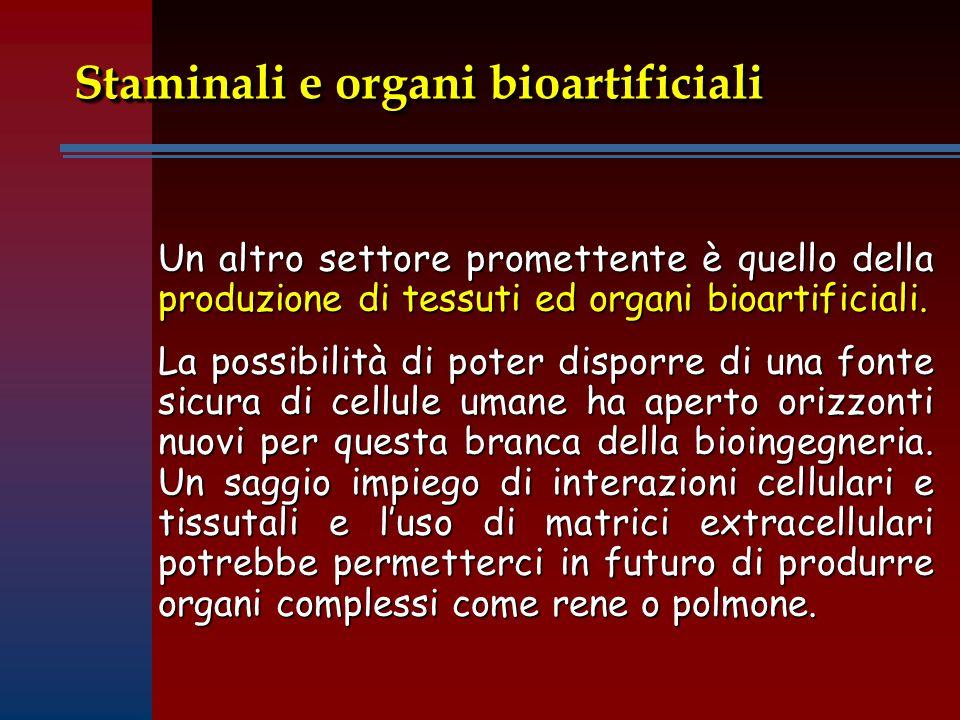 Staminali e organi bioartificiali Un altro settore promettente è quello della produzione di tessuti ed organi bioartificiali.