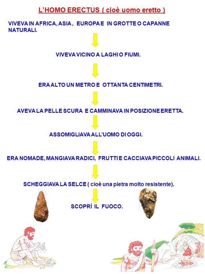 L'HOMO ERECTUS ( cioè uomo eretto ) VIVEVA IN AFRICA, ASIA, EUROPA E IN GROTTE O CAPANNE NATURALI. VIVEVA VICINO A LAGHI O FIUMI. ERA ALTO UN METRO E