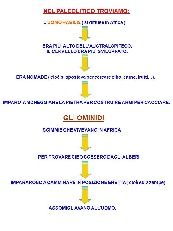 NEL PALEOLITICO TROVIAMO: L'UOMO HABILIS ( si diffuse in Africa ) ERA PIÙ ALTO DELL'AUSTRALOPITECO, IL CERVELLO ERA PIÙ SVILUPPATO. ERA NOMADE ( cioé