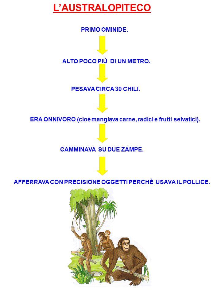 L'AUSTRALOPITECO PRIMO OMINIDE. ALTO POCO PIÙ DI UN METRO. PESAVA CIRCA 30 CHILI. ERA ONNIVORO (cioè mangiava carne, radici e frutti selvatici). CAMMI