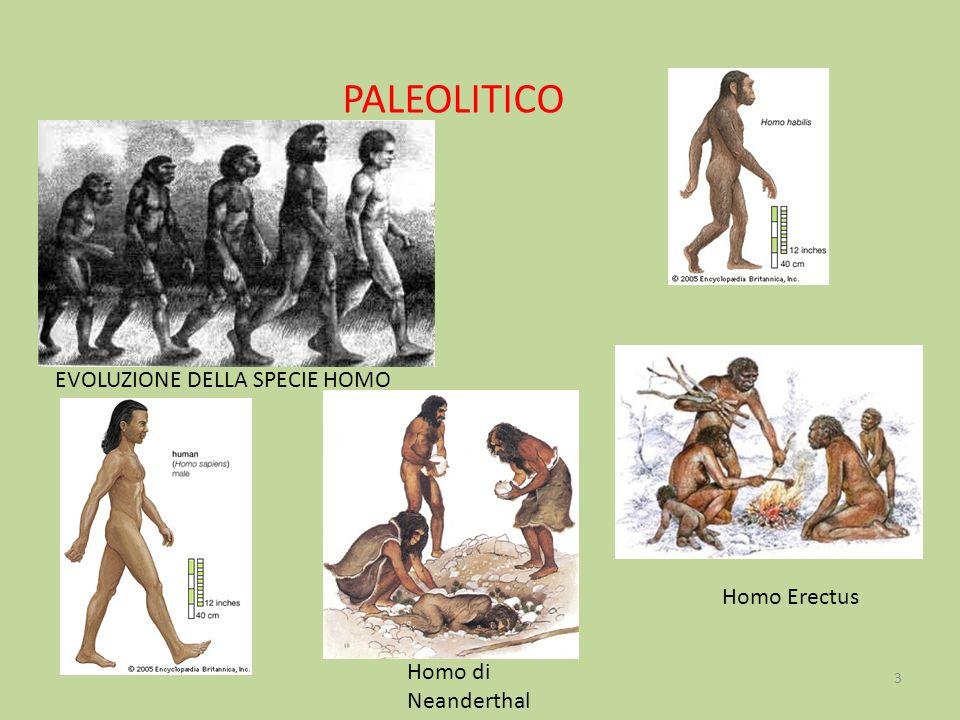 PALEOLITICO EVOLUZIONE DELLA SPECIE HOMO Homo Erectus Homo di Neanderthal 3