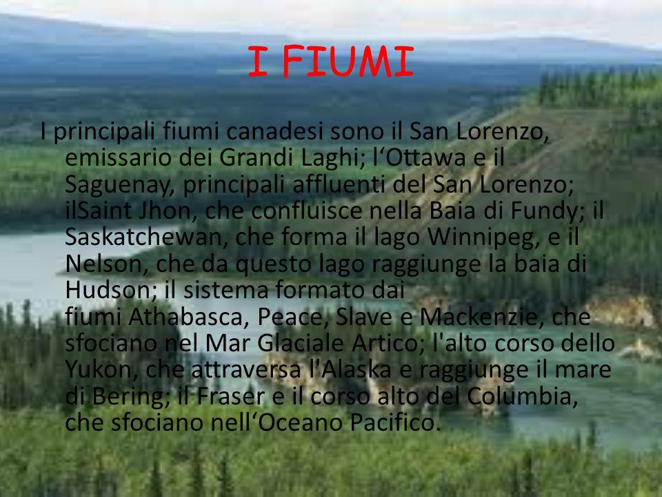 I FIUMI I principali fiumi canadesi sono il San Lorenzo, emissario dei Grandi Laghi; l'Ottawa e il Saguenay, principali affluenti del San Lorenzo; ilSaint Jhon, che confluisce nella Baia di Fundy; il Saskatchewan, che forma il lago Winnipeg, e il Nelson, che da questo lago raggiunge la baia di Hudson; il sistema formato dai fiumi Athabasca, Peace, Slave e Mackenzie, che sfociano nel Mar Glaciale Artico; l alto corso dello Yukon, che attraversa l Alaska e raggiunge il mare di Bering; il Fraser e il corso alto del Columbia, che sfociano nell'Oceano Pacifico.