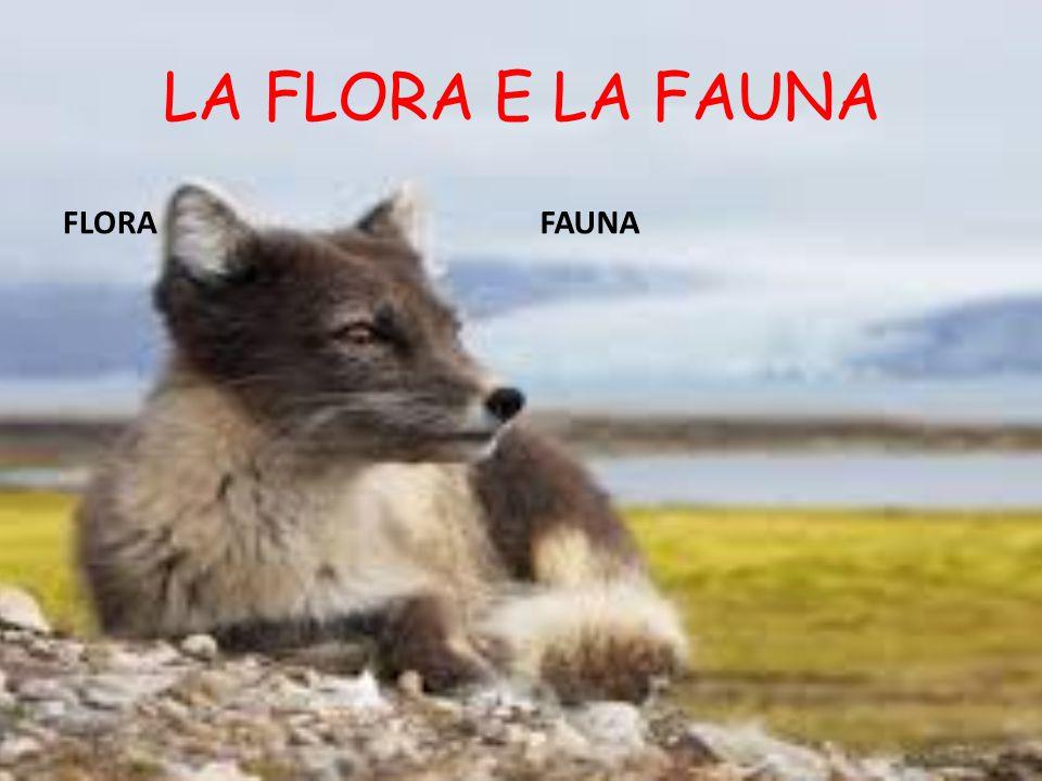 LA FLORA E LA FAUNA FLORAFAUNA