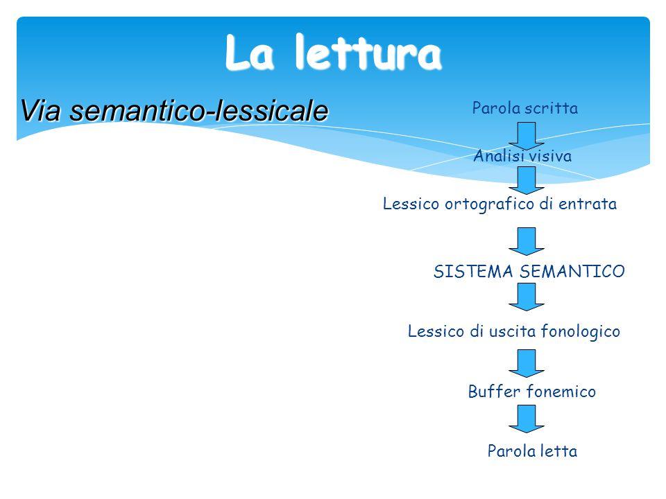 La lettura Parola scritta Analisi visiva Lessico ortografico di entrata SISTEMA SEMANTICO Lessico di uscita fonologico Buffer fonemico Parola letta Vi