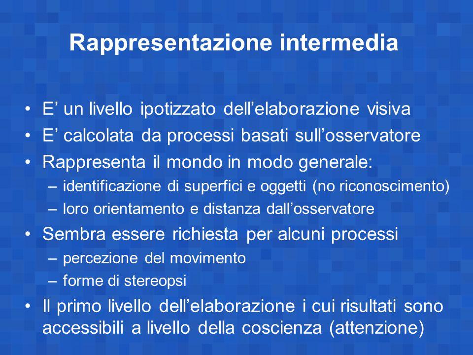Rappresentazione intermedia E' un livello ipotizzato dell'elaborazione visiva E' calcolata da processi basati sull'osservatore Rappresenta il mondo in