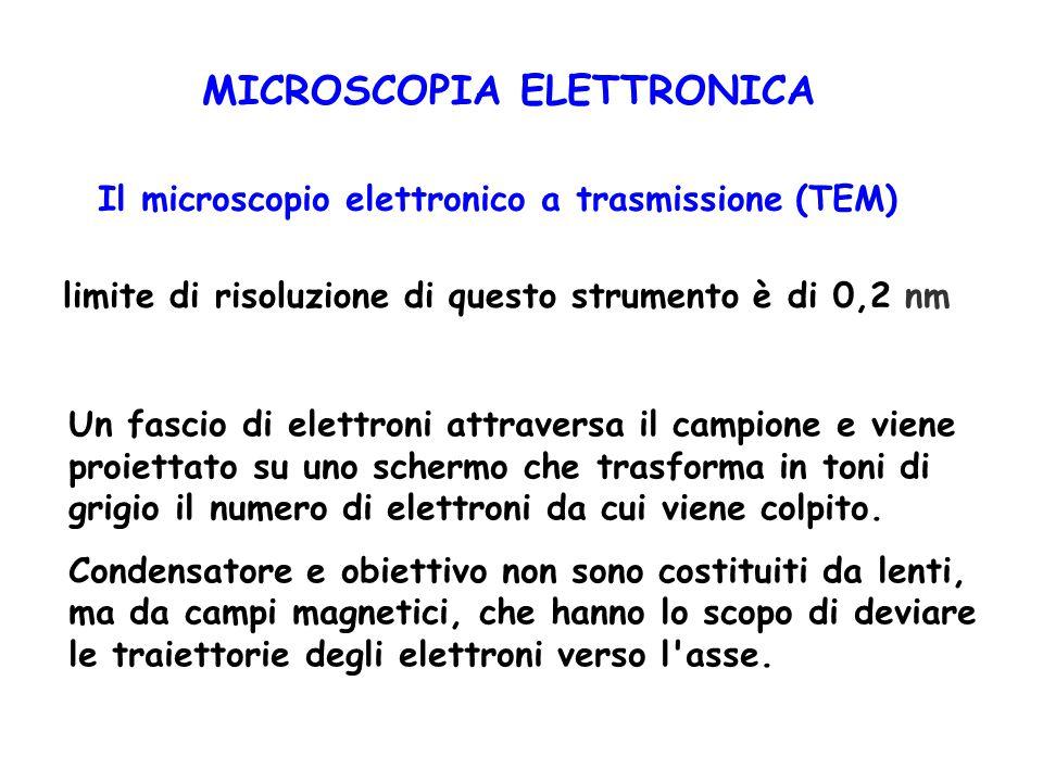 MICROSCOPIA ELETTRONICA Il microscopio elettronico a trasmissione (TEM) limite di risoluzione di questo strumento è di 0,2 nm Un fascio di elettroni a
