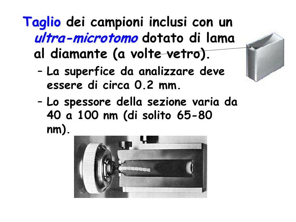 Taglio ultra-microtomo Taglio dei campioni inclusi con un ultra-microtomo dotato di lama al diamante (a volte vetro). –La superfice da analizzare deve