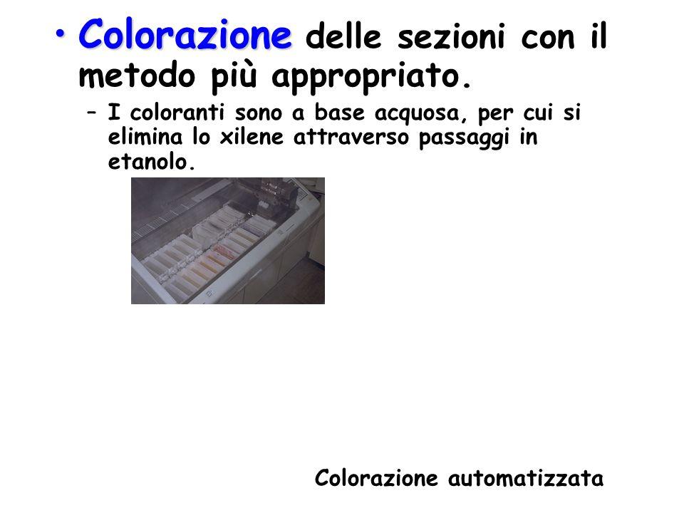 ColorazioneColorazione delle sezioni con il metodo più appropriato. –I coloranti sono a base acquosa, per cui si elimina lo xilene attraverso passaggi